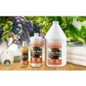 BodyChoice Grape Seed Massage Oil